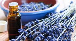 Essential-Oils-Pure-Blue