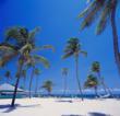 White sand beach at Nisbet Plantation Beach Club, Nevis