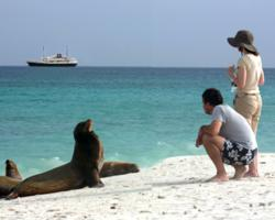 IE Galapagos cruise guests spot sea lions while the M/V Evolution waits in the background.