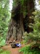 Ranger Talk by zaui, finalist in the 2011 Save the Redwoods League Photo Contest. More info at SaveTheRedwoods.org/contest