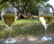 Wine and Bike in the Balaton Uplands