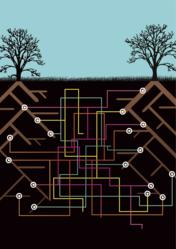 The Underground Mycorrhizal Market between Plants and Fungi