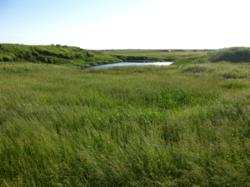 Ducks Unlimited, Grassland, Conservation, Easement, United Country, South Dakota land for sale, South Dakota ranch, South Dakota property auction, South Dakota real estate auction