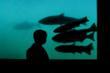 Salmon celebrated. Image Courtesy Jeff Strickler