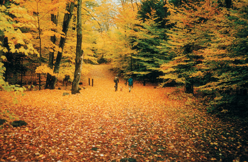 Getaway To The Adirondack Region For Spectacular Fall