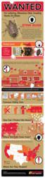 Stink Bug Infographic