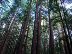 Day In The Redwoods with Tamron, Redwood Regional Park