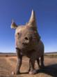 Black Rhinoceros, South Africa © naturepl.com /Mark Carwardine / WWF