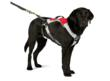 Ruff Wear's Omnijore Joring System: Towline and Dog Harness
