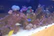 Marine reef