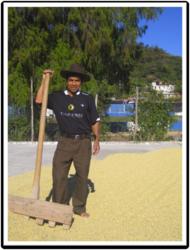 A coffee farmer wearing a FORZA Coffee Company jersey