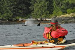 kayaking, killer whales, orcas, British Columbia, kayaking with whales, kayaking Vancouver Island, Wild Salmon