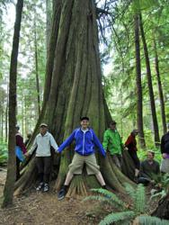 cedar tree, pristine environment, environmental protection