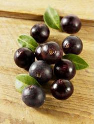 Acai berries used in Dr. Tim's Acai Juice