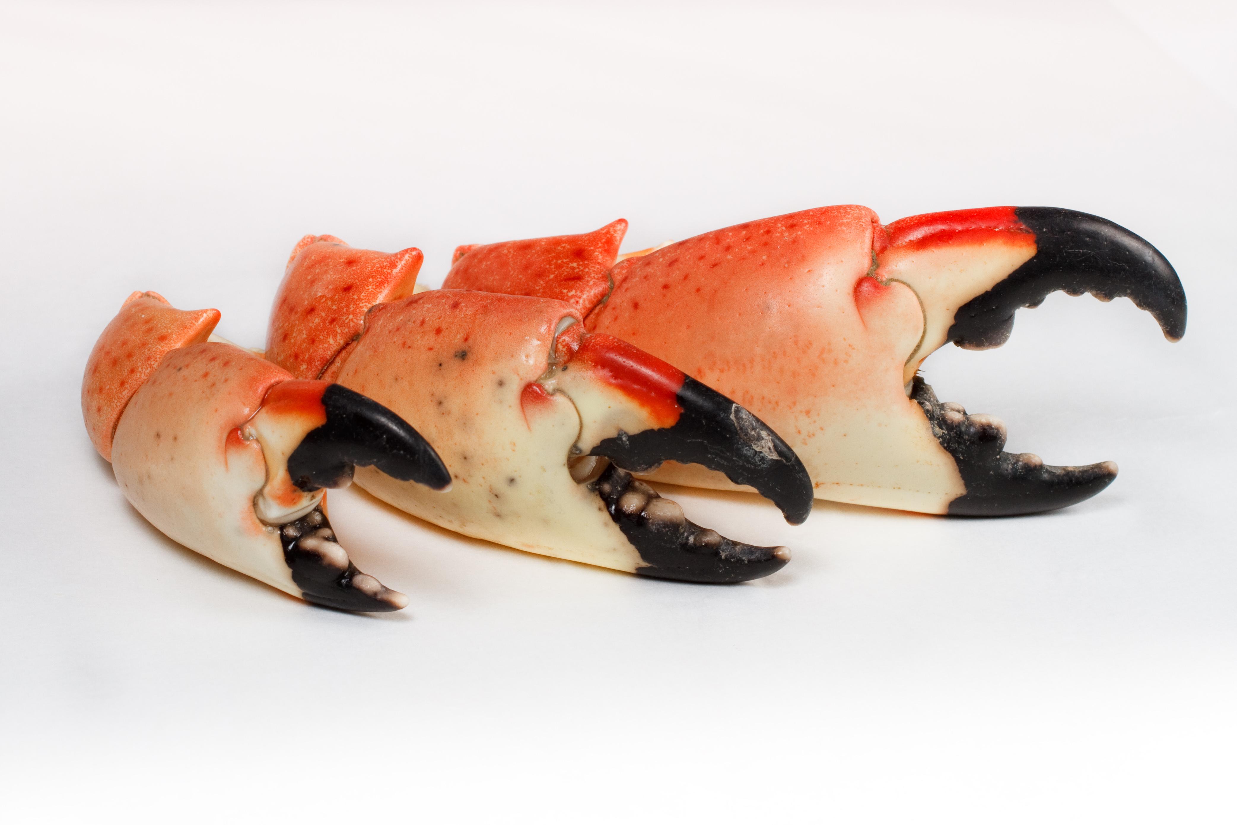 Crab Legs North Myrtle Beach