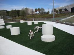 Dogs romp on K9Grass, the artificial grass designed specifically for dogs, at the Curtis Hixon dog park in Tampa, Fla.