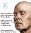 Short Telomeres