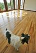 One of the EquiCenter canine friends, Dutch, enjoys the reclaimed Oak flooring in the meeting room of their Mendon, NY facility.
