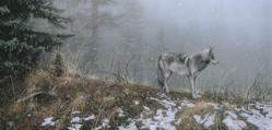 Silent Snows - Stephen Lyman - World-Wide-Art.com
