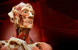 BODY WORLDS & The Brain at OMSI