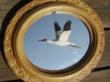 Whooping Crane, miniature, not full size mounted on  gold framed mirror