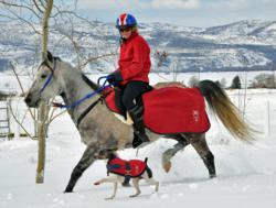 Healthy horse in winter