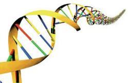 Biology and Biota