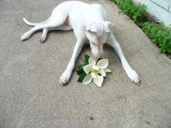 Pets Best Insurance pet health insurance