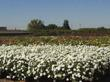 Western Star Bay Area Nursery Certified as Preferred Small Business...