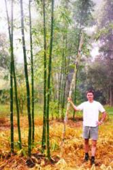 Bamboo @ VolkerKleinhenz.com