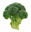 New Broccoli Resources Added to Olericulture Magazine