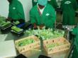 Broccoli @ Olericulture.org