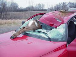 Windshield Replacement caused by Deer