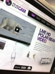 Polar bear cam web site screenshot