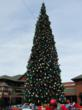 Outlets at Castle Rock Christmas Tree