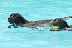 Dog vacation includes dog-friendly swimming pool