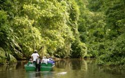 Guests explore the channels of Tortuguero