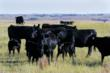 The property is income producing with plentiful grazing for cattle from its vast grasslands and prairies. Hay, corn and other crop production is also generated.