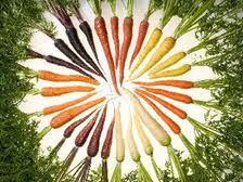 Carrot @ Olericulture.org