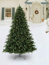 Allegheny Evergreen Outdoor Christmas Tree