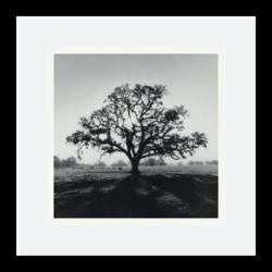 Amanti Art - Adams Oak Tree Sunrise