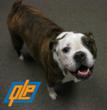 Post Your Pet's Picture on Quality Logo Products' Facebook Page and QLP Will Donate $1 to TAILS Humane Society