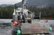 LaDonna and Ole Gundersen's  32 foot fishing vessel, the LaDonna Rose near Ketchikan, Alaska.