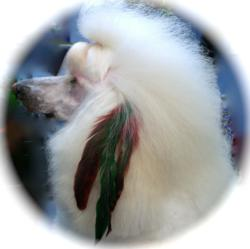 Dog Groomers can take it to the next level with Air Feathers Dog Applicable Tinsel and fantasy finds.