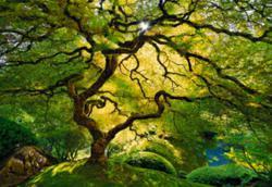"Peter Lik's winning image, ""Inner Peace."""