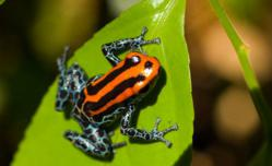 Spot vibrant wildlife on naturalist-guided rainforest hikes