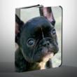 Create a unique iPad case with a photo of a pet.