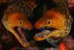 """Luis Miguel Cortes Lozano, 1st Place, Portrait 2011, """"Twins"""""""