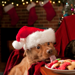 The Green Leaf Pet Resort & Hotel - Holiday Time