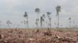 Paper Giant APP's Greenwashing Campaign Hides Forest Destruction; Asia...
